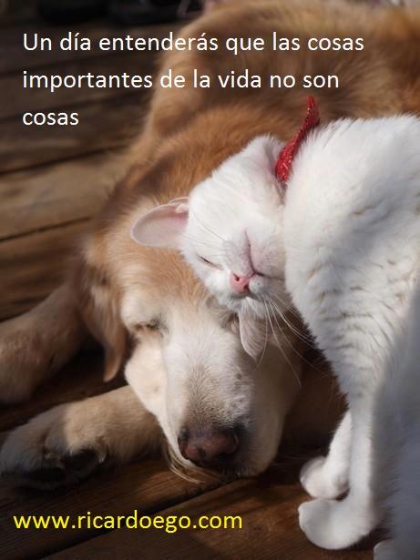 121229_gato-carinyoso-con-perro_dogah