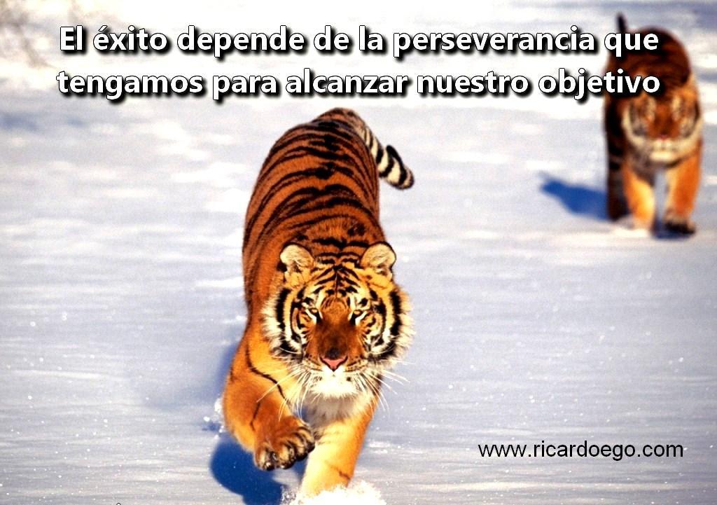 El exito depende de la perseverancia que tengamos para alcanzar nuestro objetivo
