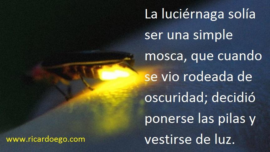 Luciérnaga
