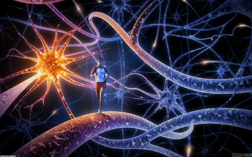 sistema-inmune-y-ejercicio