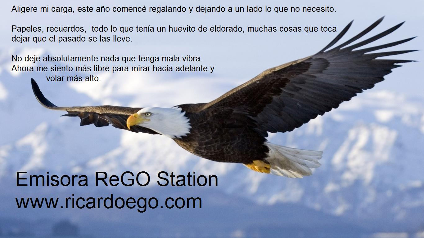 Aguila_calva_volando