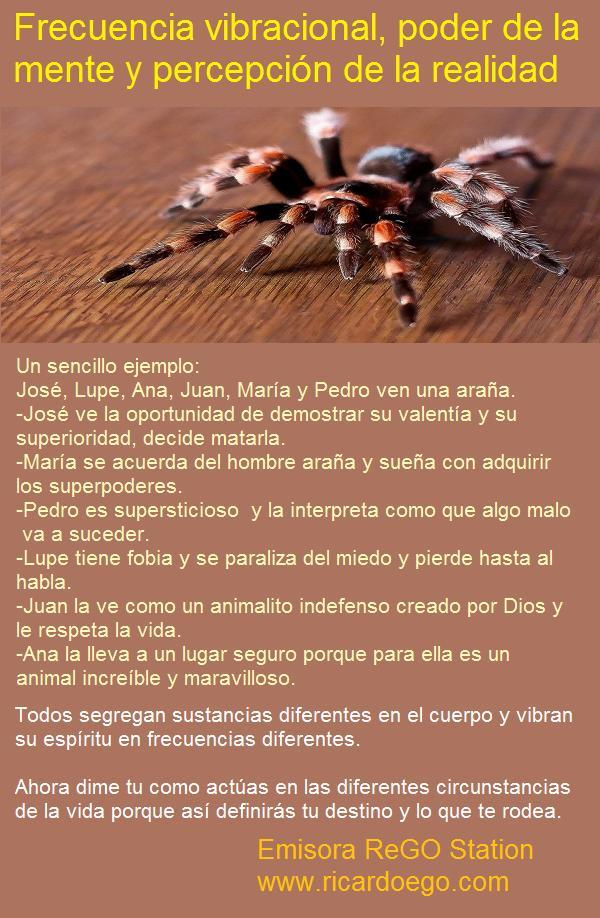 arañas-19-600x337