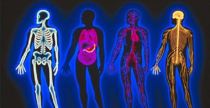 cuerpo-humano-fisico-energetico