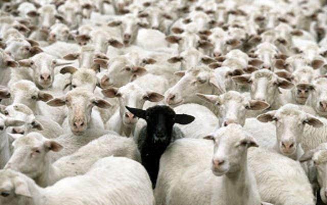 la-oveja-negra