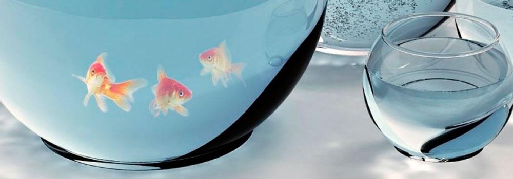 peces-de-colores-saltando-entre-peceras_atrapados